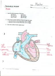pictures circulatory system of herdmania human anatomy diagram circulatory system of herdmania organ anatomy