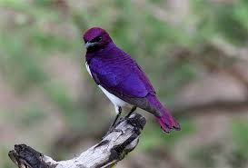 Image result for smallest bird in florida