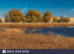 Benson Pond High Resolution Stock Photography and Images - Alamy