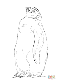 Emperor Penguin Coloring Pages Printable With Emperor Penguin Chick