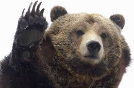 Image result for grizzly