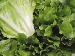 garden greens. Lettuce Garden Greens