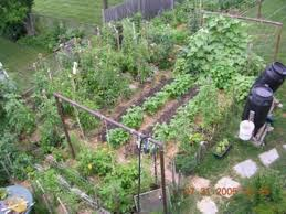 Small Picture Small Vegetable Garden Design Plan a Plant When to Plant