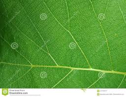 Groen Blad Geweven Behang Als Achtergrond Stock Afbeelding