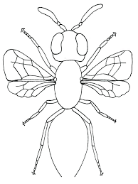 bugs firefly jar coloring page printable bugs firefly jar coloring bugs firefly jar