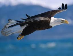 check out our post on bald eagles m200endangeredspecies wordpress