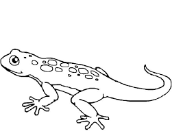 Small Picture Lizard coloring pages free to print ColoringStar