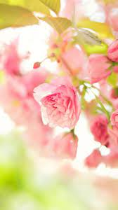 Spring Season Mobile Wallpaper HD ...