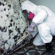 mold remediation image