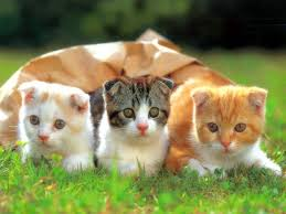 cats hd wallpapers