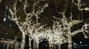 trees covered with lights in nyc financial district marina