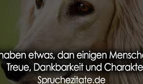 Tiere Haben Etwas Dan Einigen Menschen Fehlt Treue Dankbarkeit