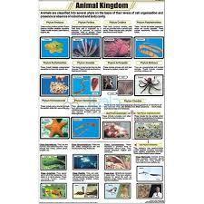 Animal Kingdom Classification Chart India Animal Kingdom