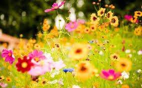 3d hd wallpapers flowers.  Flowers Images Of Flowers Show More 1 With 3d Hd Wallpapers Flowers