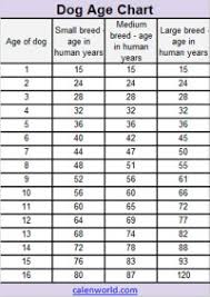 Cat Years Chart Calculator Cat Years To Human Years Conversion Chart Whats Your