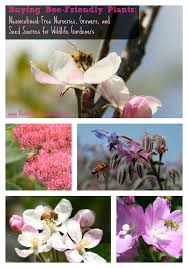 a comprehensive list of neonicotinoid free nurseries plant growers and seed sources for