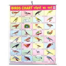 Hindi Birds Name Chart Large Birds Chart Poster 57 X 45cm For The Wall Colored English Hindi