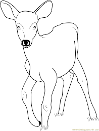 33 Deer Color Page, Free Printable Deer Coloring Pages For Kids ...