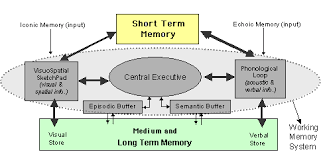 Long Term Memory Chart Mind Development The Architecture Of Memory