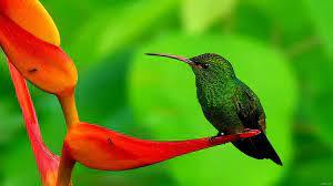 Cute Nature Birds Wallpaper Hd ...