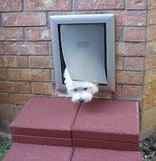 petsafe dog doors australia