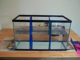 4 bettas diy aquarium dividers