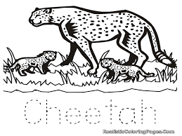 Great Cheetah Coloring Page 71 For Your Coloring Pages Online With