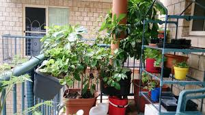 image of best balcony vegetable garden ideas
