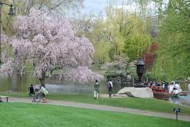 take a ride on the swan boats in the boston public garden