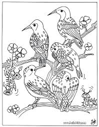 Bird Group Coloring Pages Bird Coloring Pages Realistic