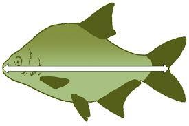 Regional Rod Fishing Byelaws South East Region Gov Uk