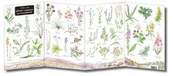 Field Guide Moorland Plants