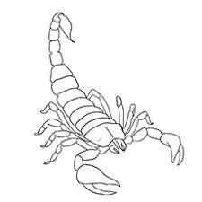 Top 10 Scorpion Kleurplaten Voor Uw Peuter Momjunccom