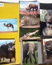 diurnal animals list for kids. Wonderful List To Diurnal Animals List For Kids