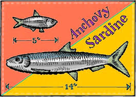Sardines and Anchovies - Similarities and Differences - Zingerman's  Community of Businesses