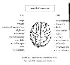 ทำความรู้จักสมองและการบริหารสมอง - สถาบันเสริมพัฒนาการเด็ก  สอนเสริมทักษะการเรียนรู้ เรียนพิเศษอนุบาล และจำหน่ายเครื่องเล่นสนาม  ของเล่นเสริมพัฒนาการ : Inspired by LnwShop.com