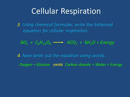 3 cellular respiration 3 using chemical formulas write the balanced