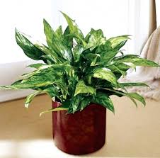 low maintenance office plants. Must See Office Design Low Maintenance Plants Light Small Indoor E