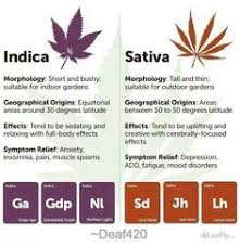 Sativa And Indica Chart Sativa Vs Indica Chart