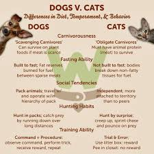 on pets cats cats vs dogs compare and contrast essay bartleby com