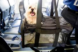 flying with pets pet air travel tips