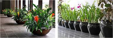 Interior landscaping office Green Walls Office Products And Services Interior Plant Interior Landscaping Services Parker Plants Interior Landscaping Of Houston Office Plant Service The Woodlands