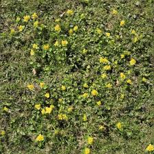 tall grass texture seamless. MG_2914 3456x3456 Seamless Tall Grass Texture