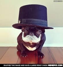 French bulldog like a sir - MemePix via Relatably.com