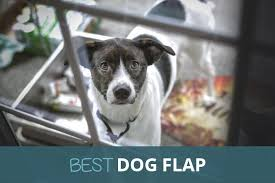 best dog flap 2021 automatic manual