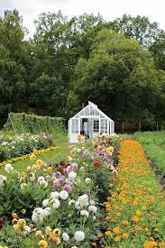 how to grow your own cut flowers what to grow