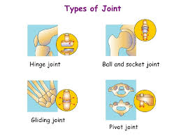 ball and socket joint. 12. types of joint hinge ball and socket