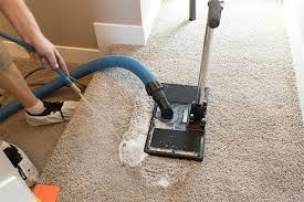 removing dog urine from carpet when