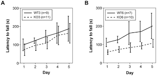 abnormal motor phenotype at adult stages in mice lacking type 2 thumbnail