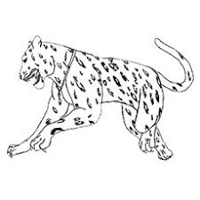 Jaguar Animal Drawing At Getdrawingscom Free For Personal Use